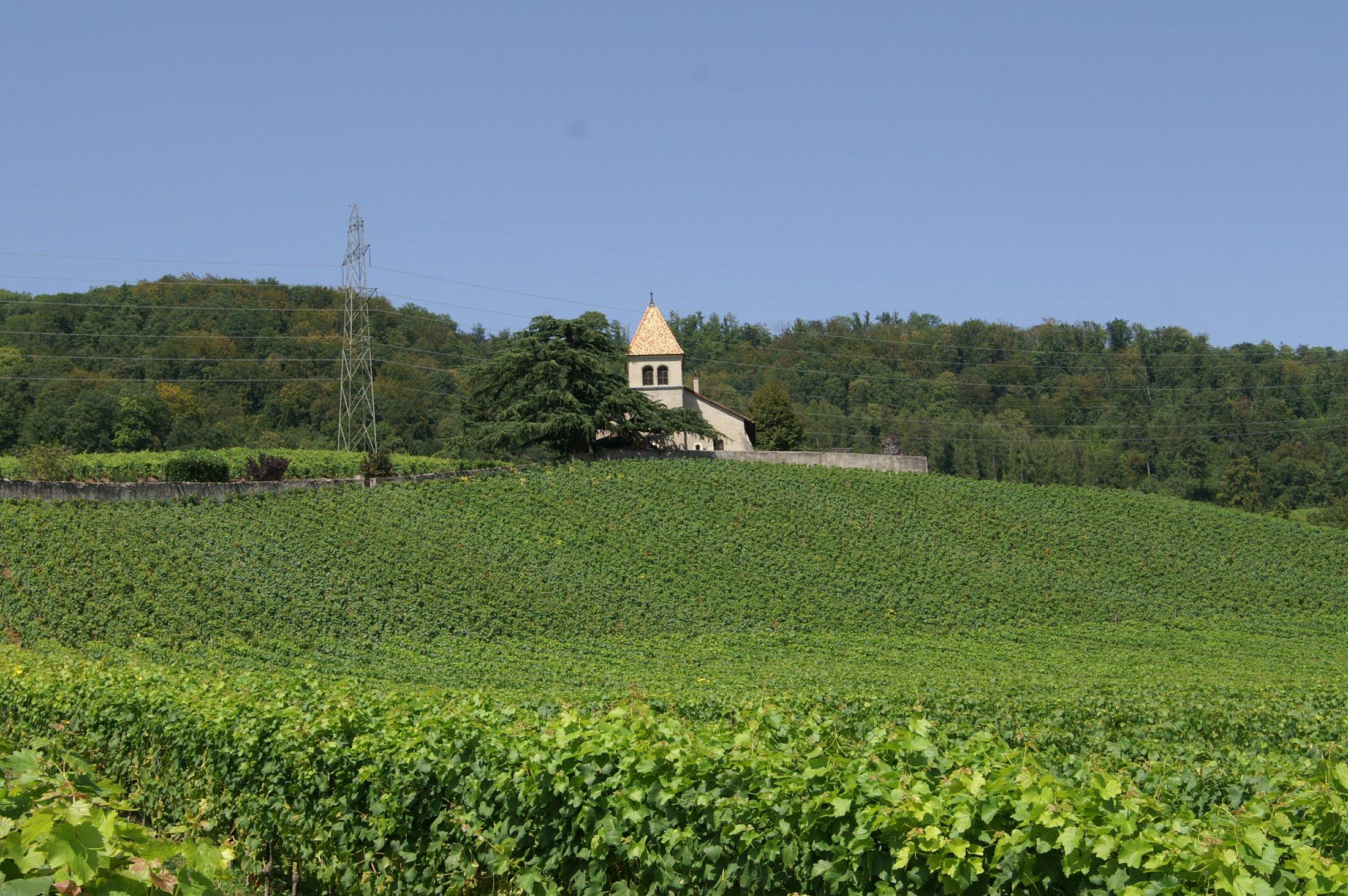 L'église de Luins, au milieu des vignes. © Andrew Schiewe
