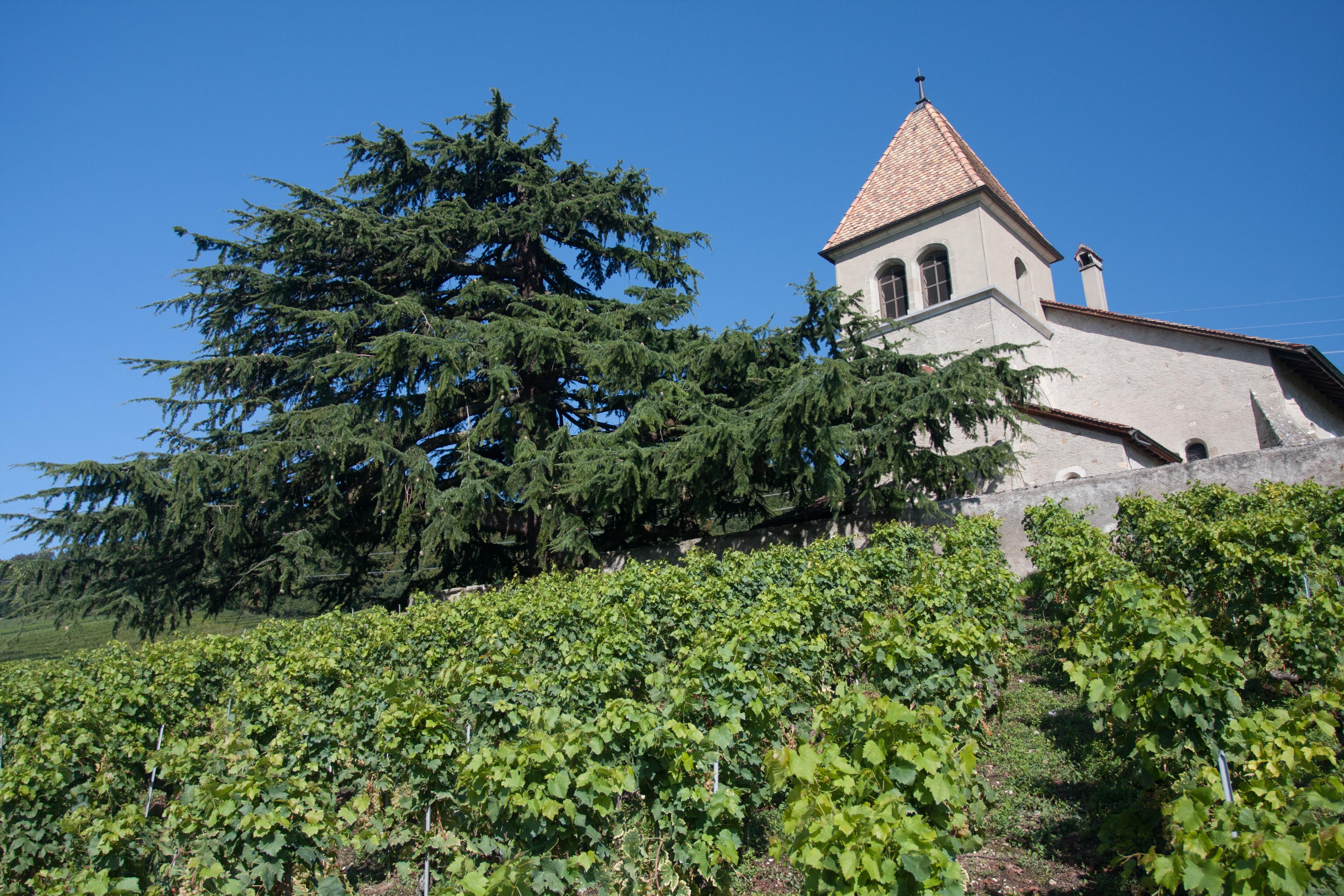 L'église de Luins.