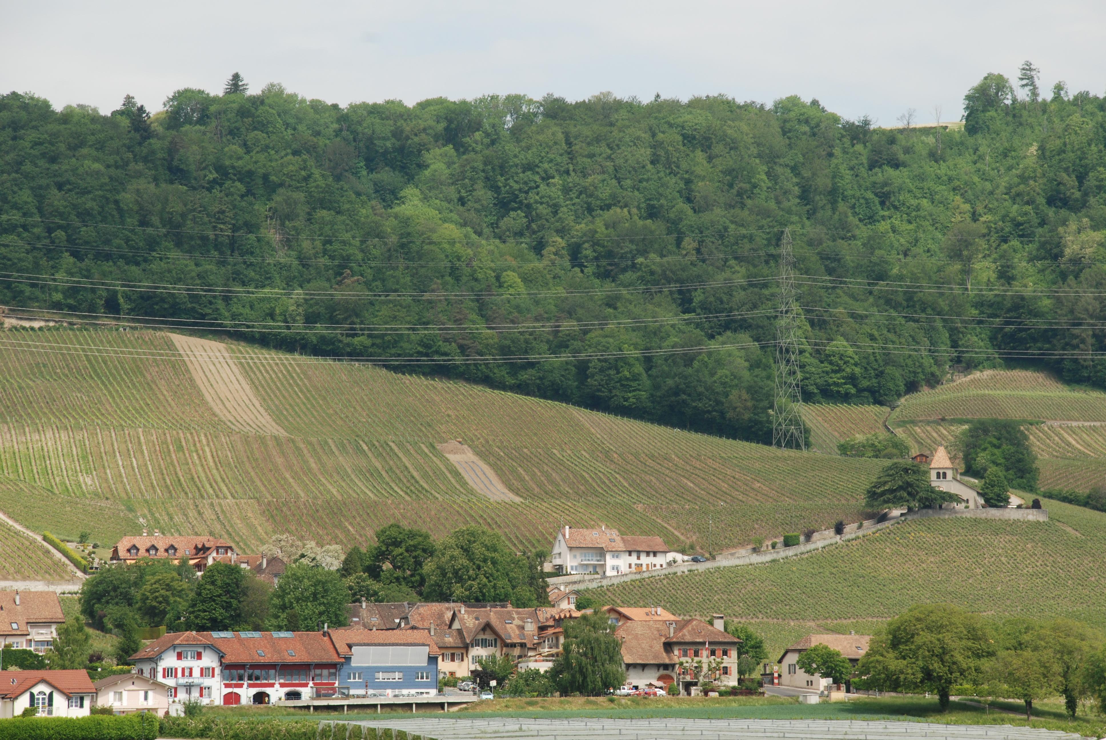 Le village de Luins vu du sud.