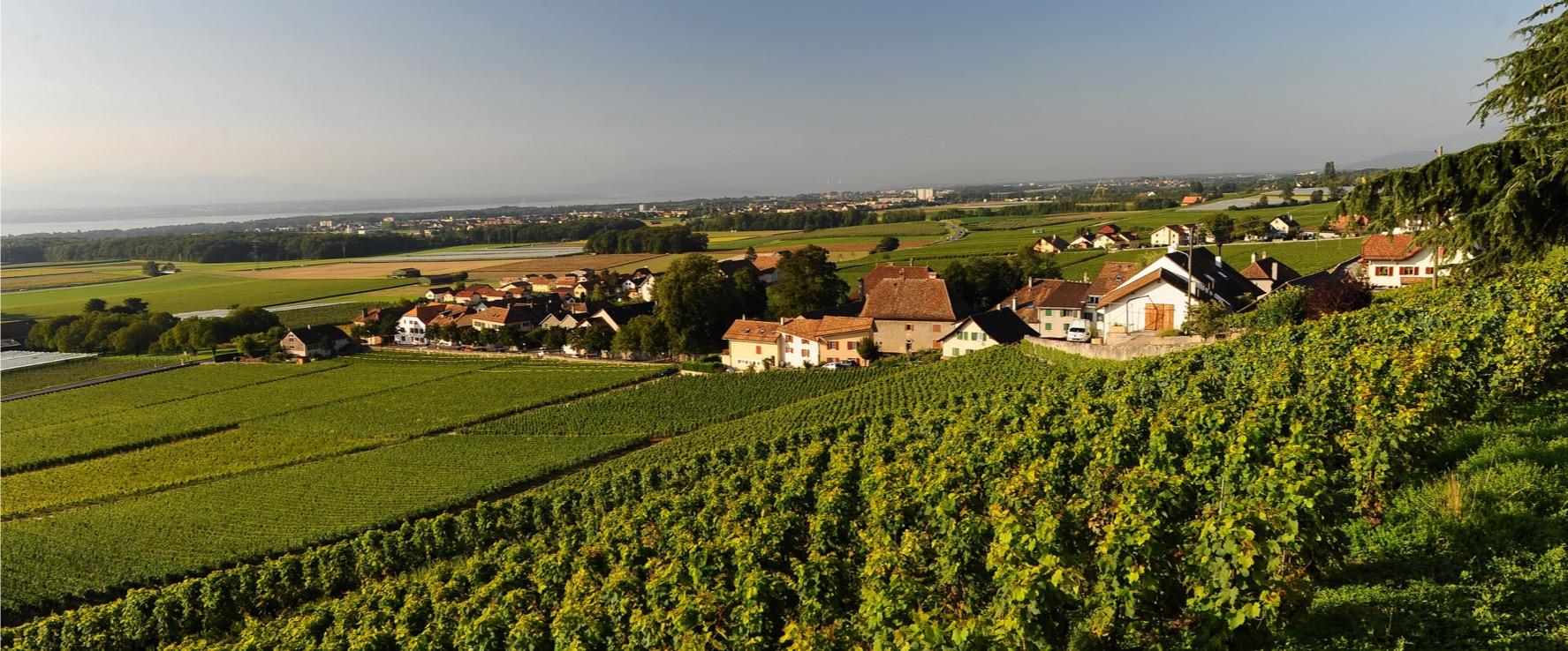 Le village de Luins