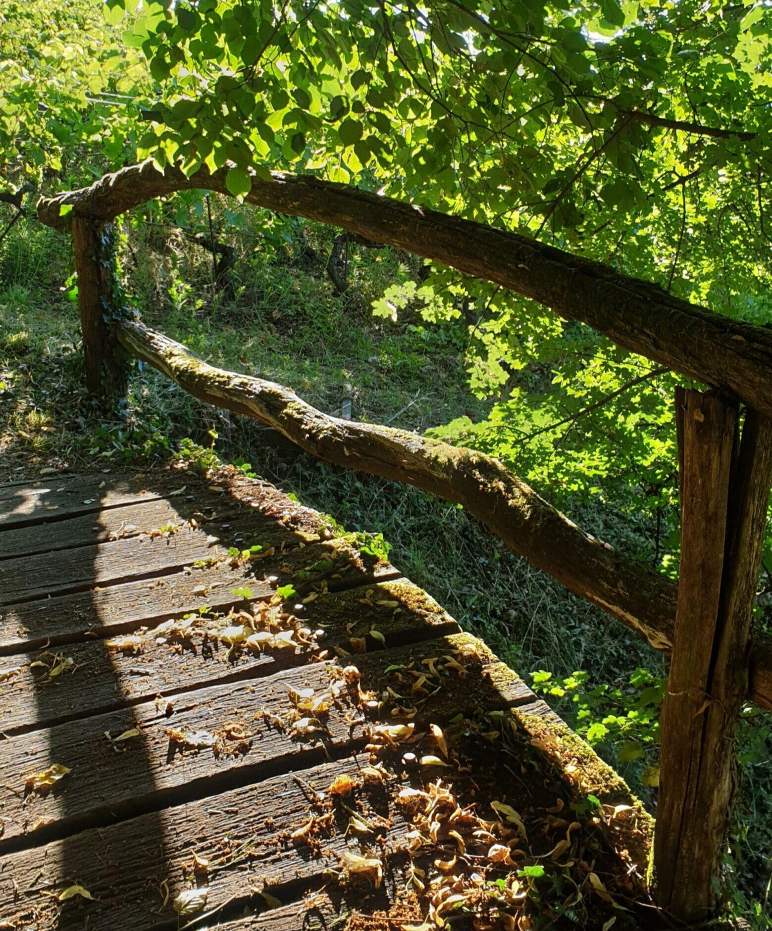 Sentier des Châtaignes